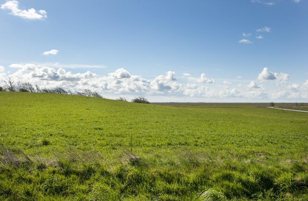 Man aner svagt terrænforskellen mellem Herredsbjerget og marsken. Foto: Torben Meyer.